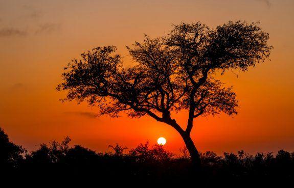 Mpala – Vores paradis midt i bushen
